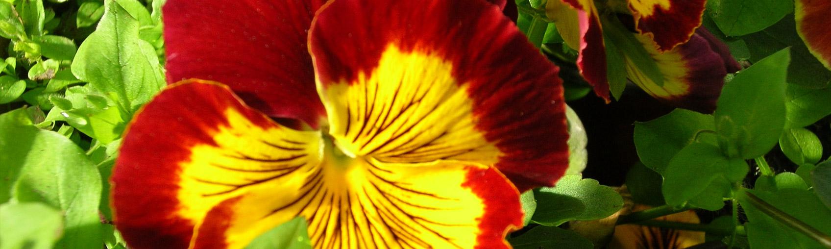 Trauerfloristik Blumen Weese